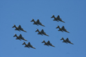 SEPECAT Jaguar diamond nine formation at RAF Coningsby